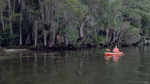 Manatee Kayaking