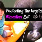 Protecting the Vegetation that Manatees Eat