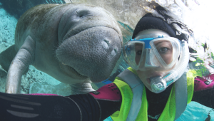 6 Essential Tips for Swimming With The Manatees
