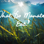 What Do Manatees Eat?