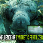 What Is The Influence of Synthetic Fertilizer's on the Air?
