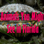 5 Beautiful Animals You Might See in Florida