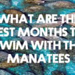 What Are The Best Months to Swim With The Manatees