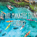 Where are manatees found in Florida?