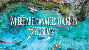 Where are manatees found in Florida