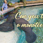 Can you teach a manatee?