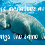 Are manatees and dugongs the same thing?