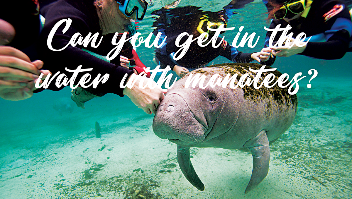 Can you get in the water with manatees?