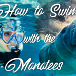 How to swim with the Manatees