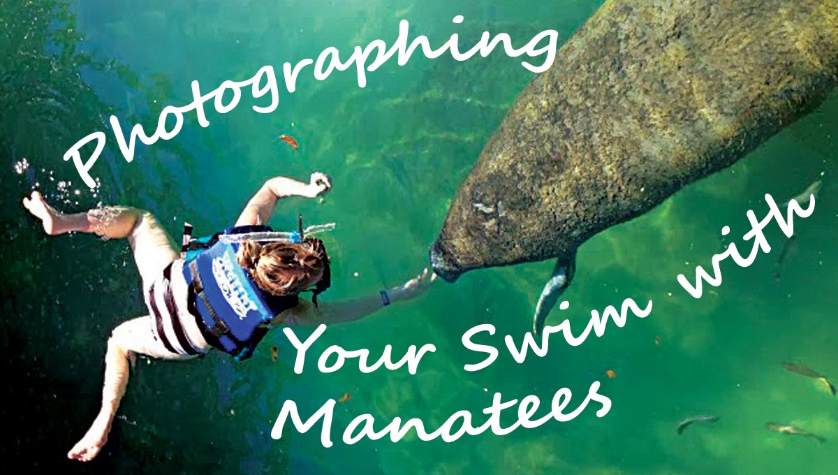 Photographing Your Swim with Manatees