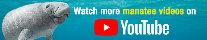 Swimming with the Manatees on Youtube