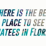 Where is the best place to see manatees in Florida?