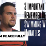 3 Important Things to Remember Before Swimming With The Manatees