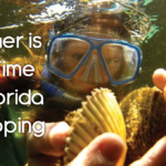 Summer is the Time for Florida Scalloping