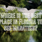 Where is the best place in Florida to see manatees?