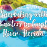 Snorkeling with Manatees in Crystal River, Florida