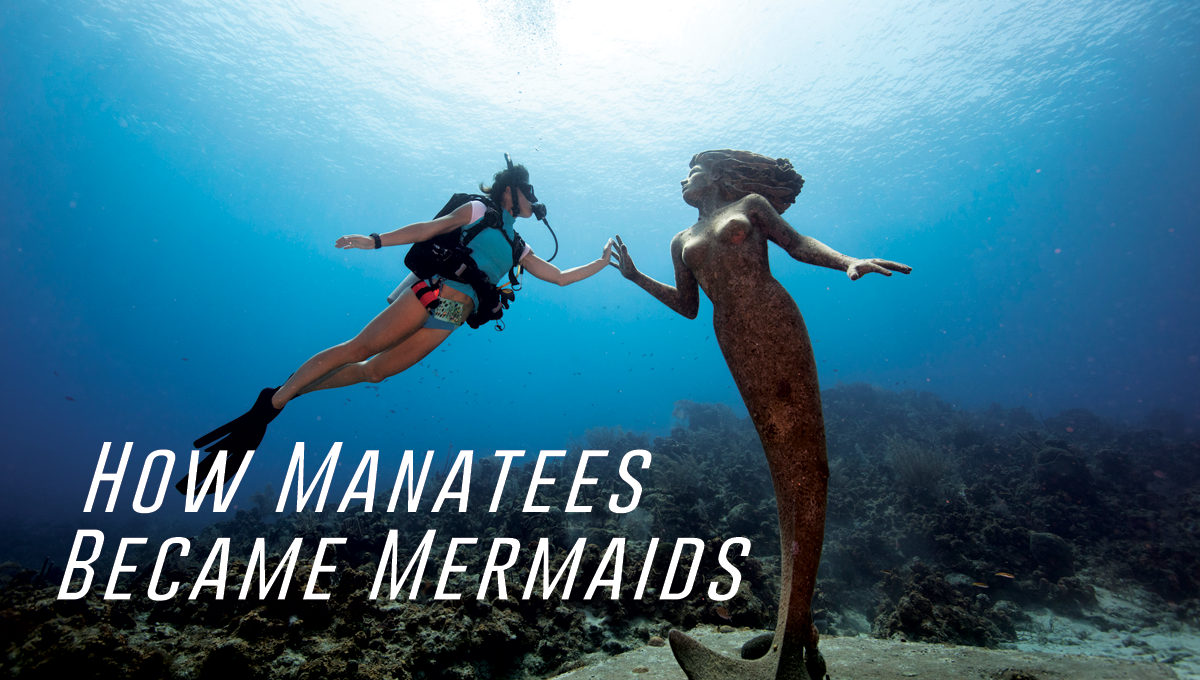 How Manatees Became Mermaids