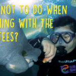 What Not To Do When Swimming With The Manatees?