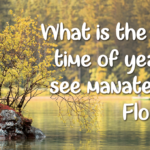 What is the best time of year to see manatees in Florida?