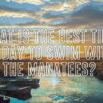 What is the best time of day to swim with the manatees?