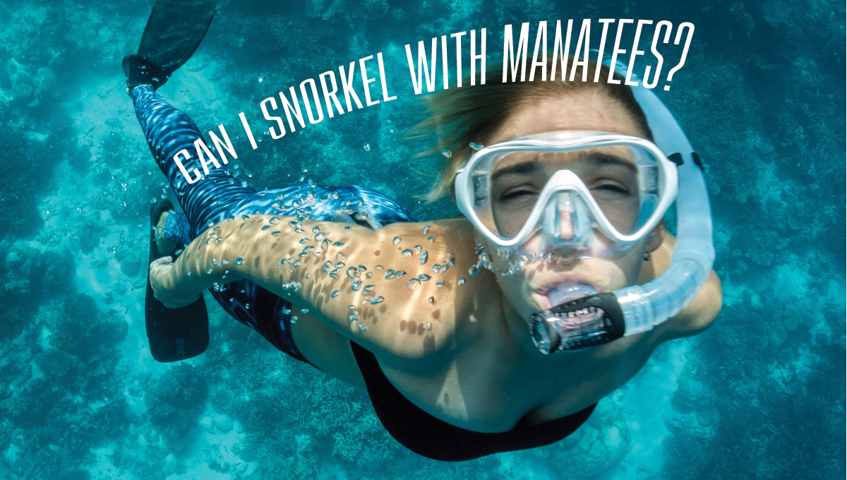 Can I snorkel with manatees?
