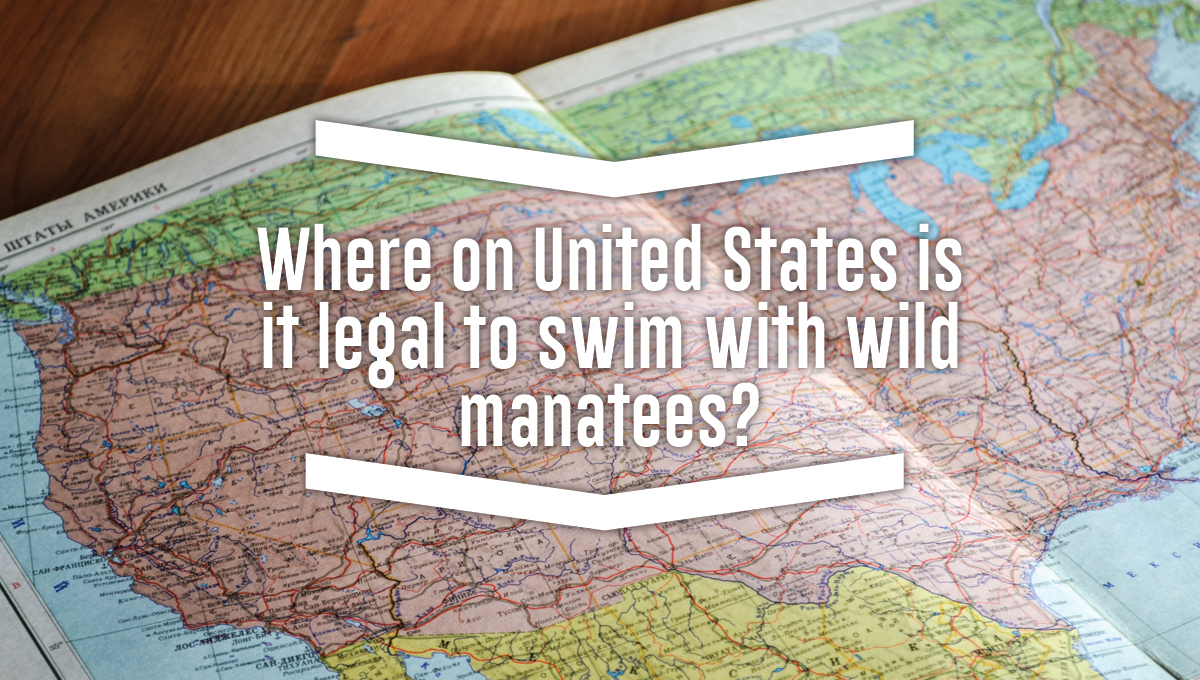 Where on United States is it legal to swim with wild manatees?