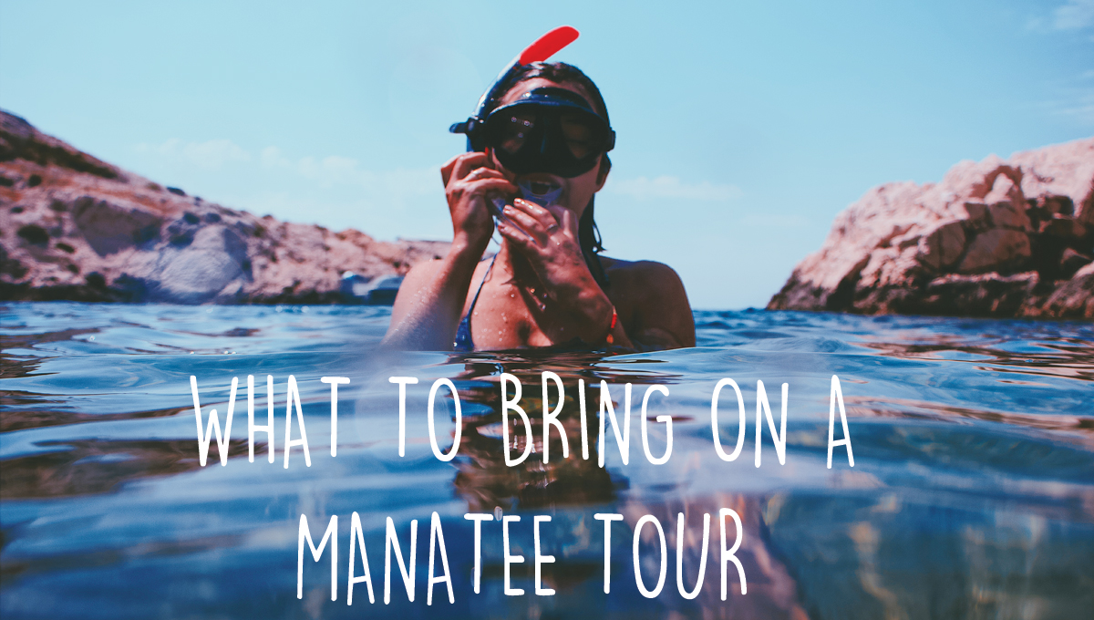 What to Bring on a Manatee Tour