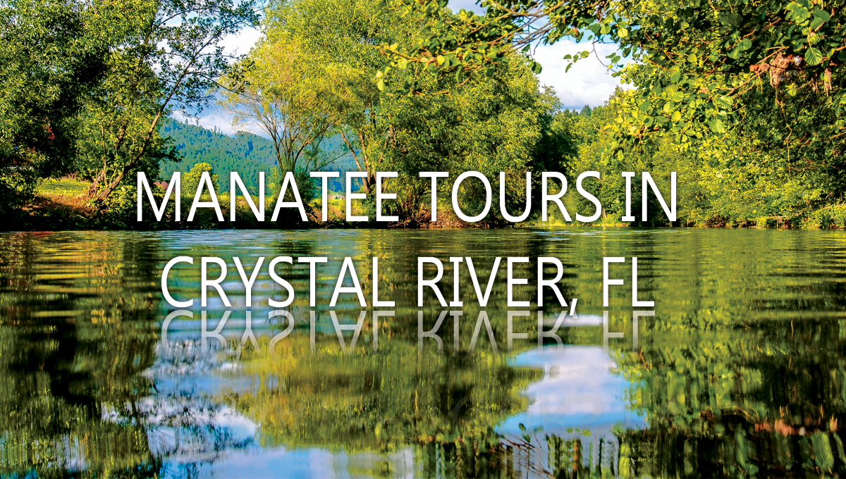 Manatee Tours in Crystal River, FL