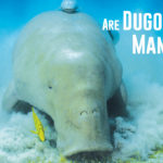 Are Dugongs and Manatees Related?