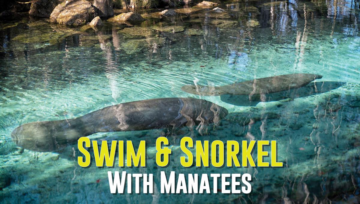Swim & Snorkel With Manatees