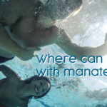 Where can I swim with manatees?