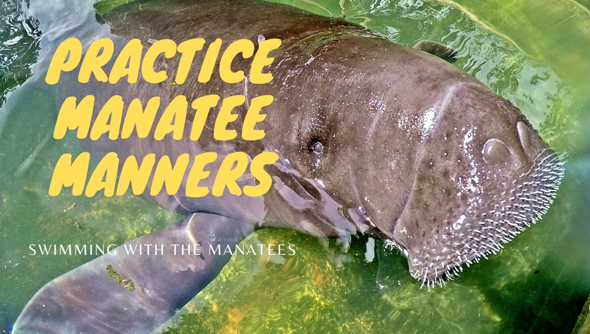 Practice Manatee Manners