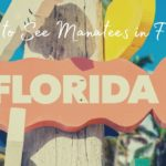 Where to See Manatees in Florida
