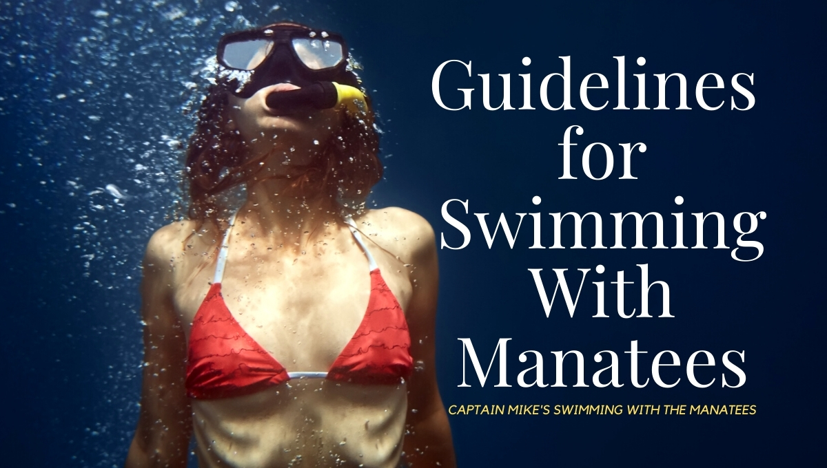 Guidelines for Swimming With Manatees