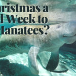 Is Christmas a Good Week to See Manatees?