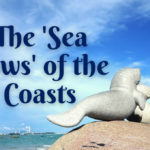 The 'Sea Cows' of the Coasts